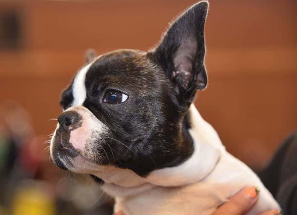 Chiara Best Puppy1 Halloweenshow 1