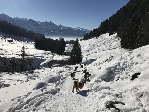 Januar 2021 Winterimpression1